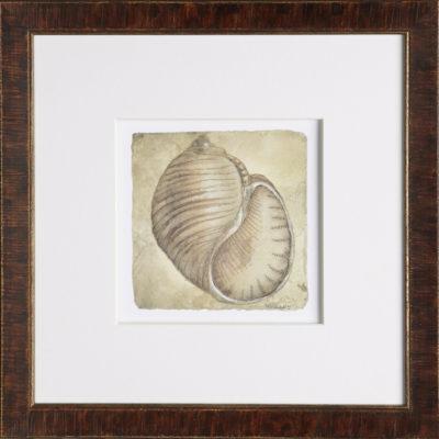 Vintage Tommy Bahama Shells No. 3