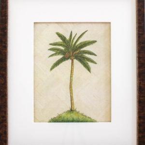 Ralph Lauren Tortoise, One Coast Design, Michelle Woolley Sauter