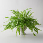 10 Pet-Friendly Plants That Promote Clean Air