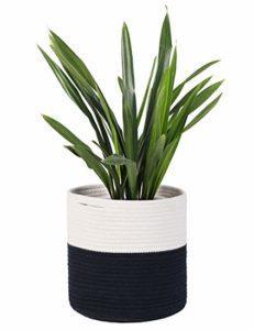 Indoor Plant Interior Design